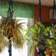 Plantenhanger maken Lemmer Friesland